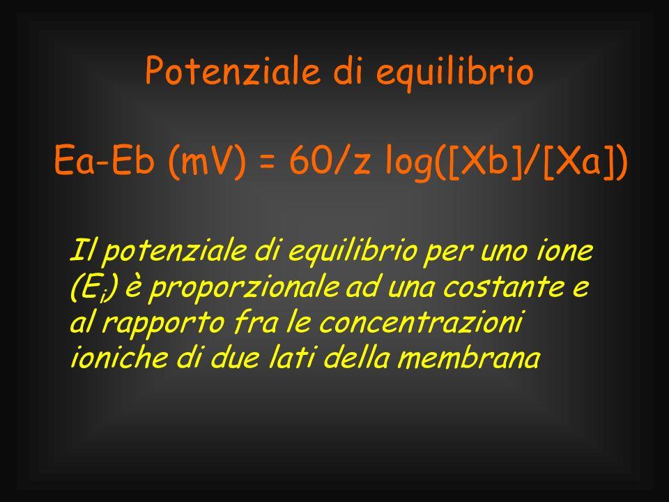 Potenziale di equilibrio Ea-Eb (mV) = 60/z log([Xb]/[Xa])